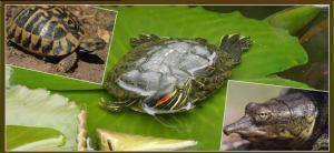 le refuge des tortues